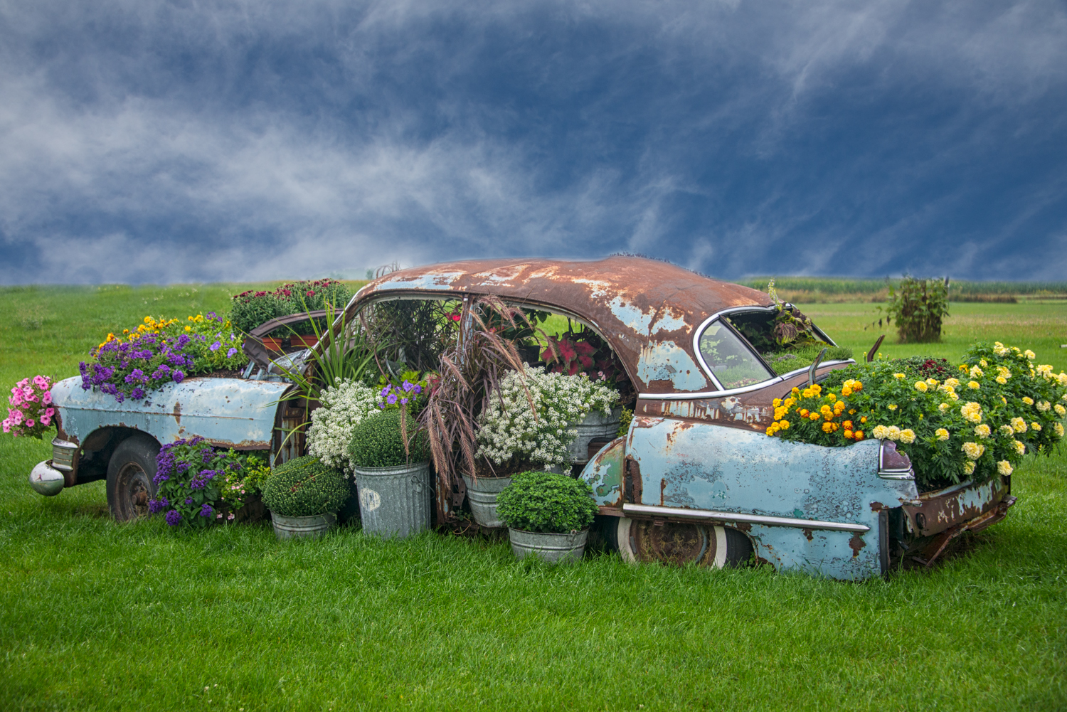 3rd place - Beautiful Rust - Phyllis Bankier