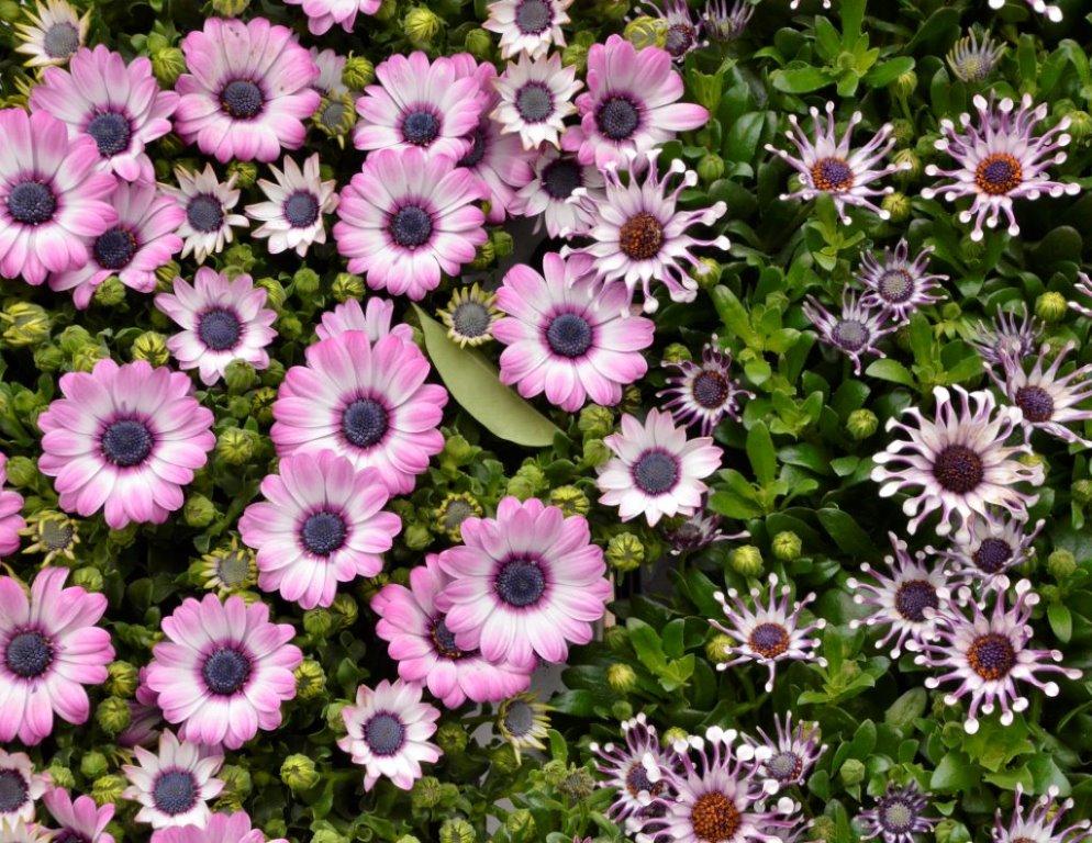 Flowers - Steve Morse