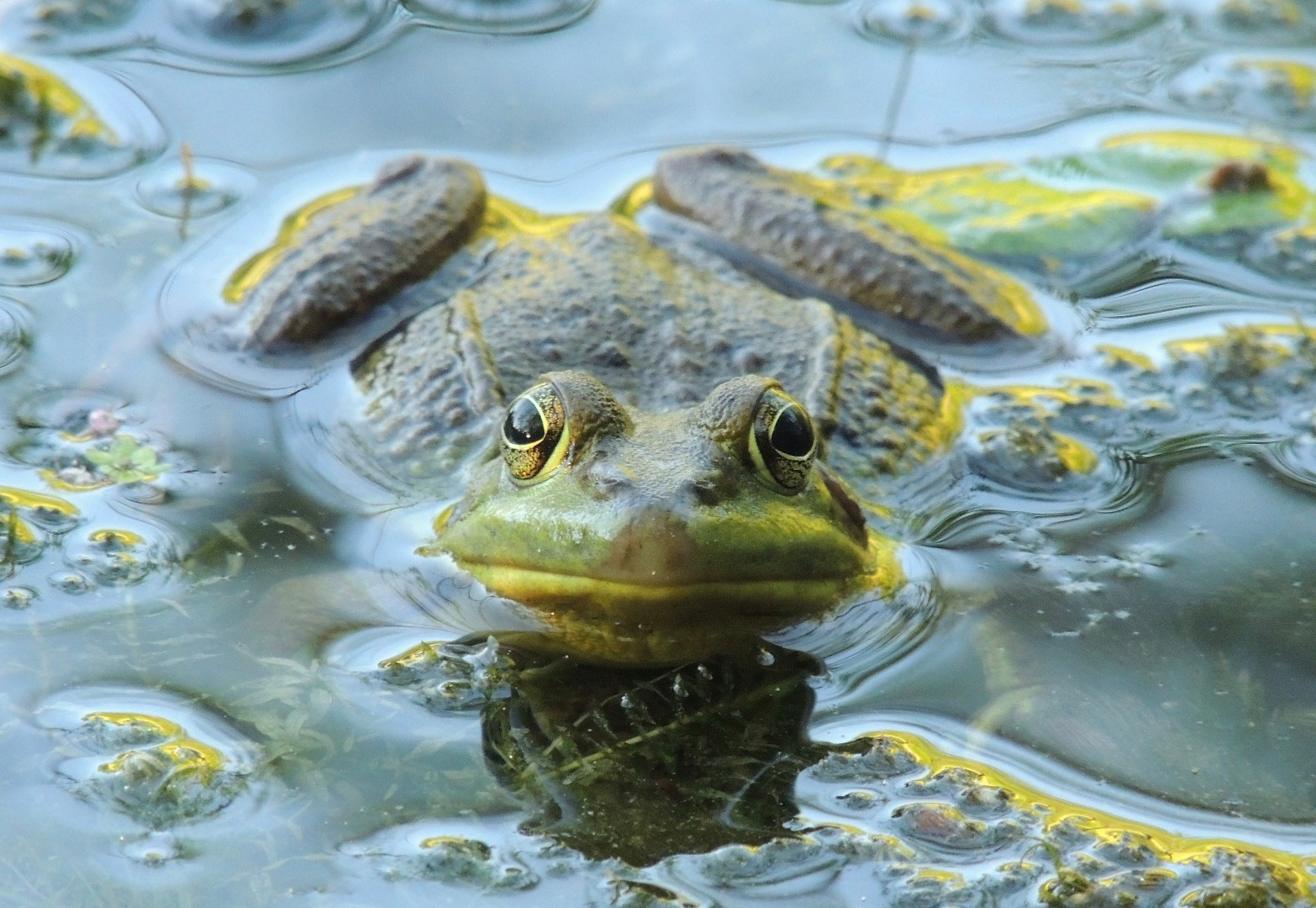 05.frog.jpg