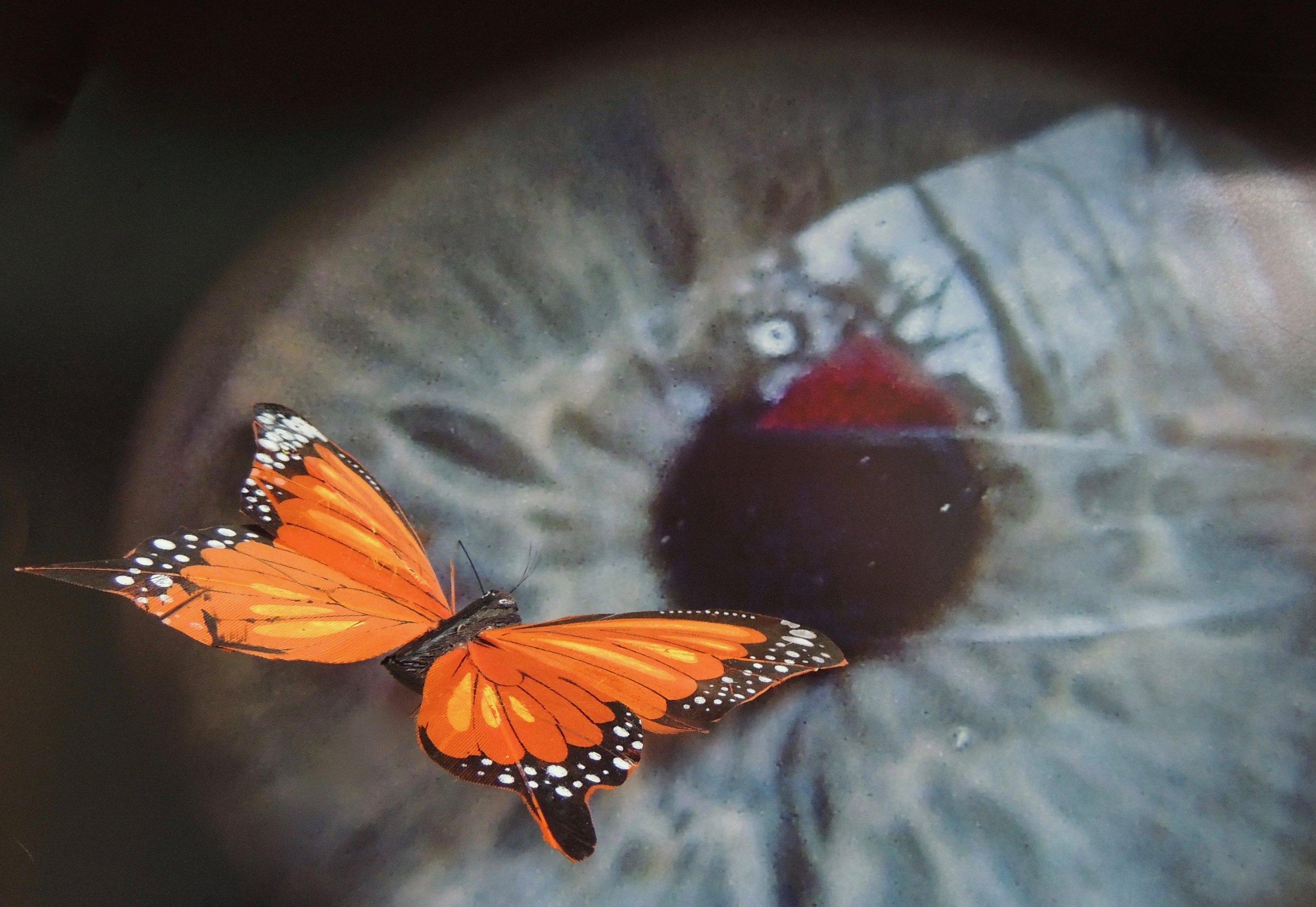 08B.mariposa y ojo.jpg