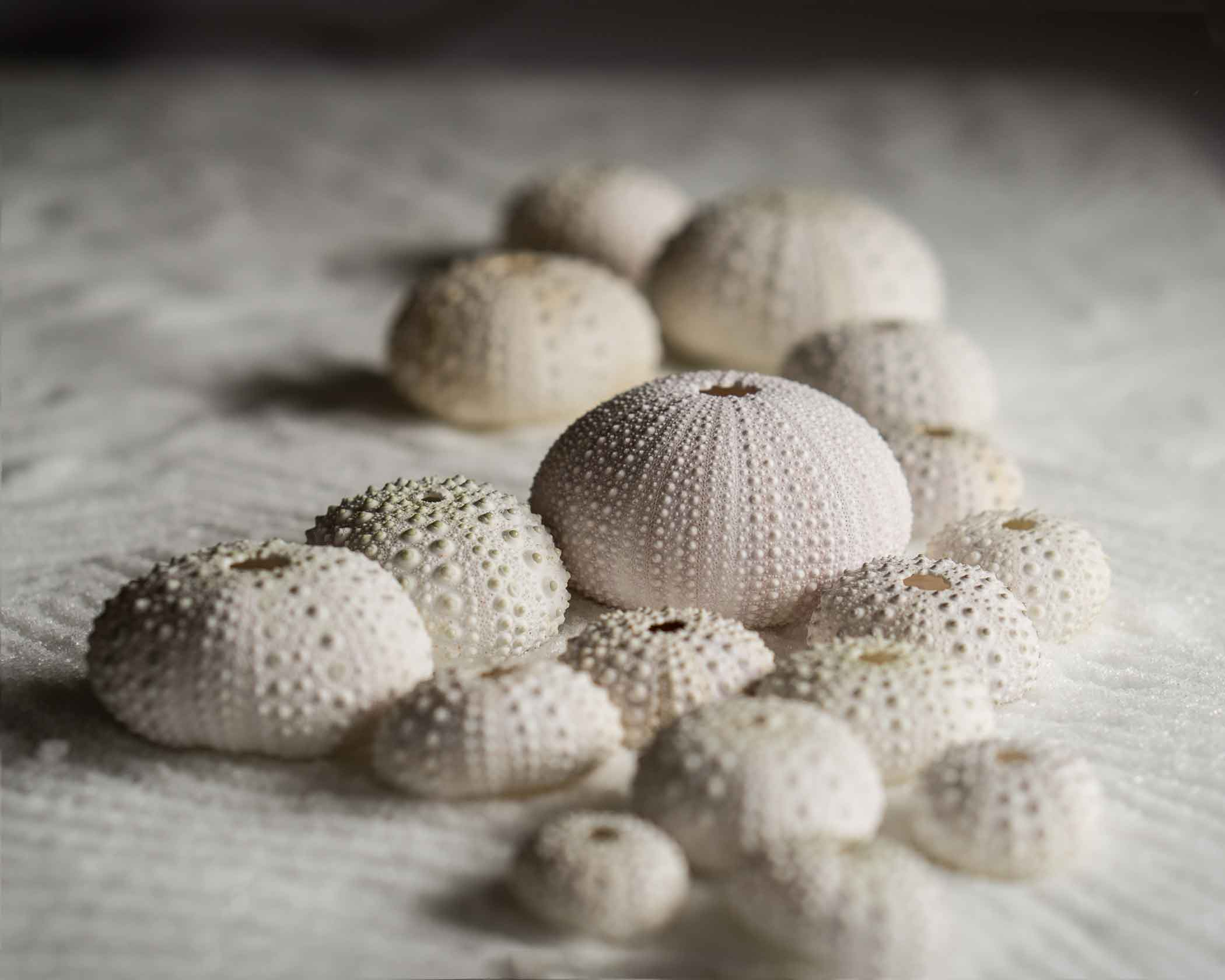 2nd place Sea Urchins with Salt - Patricia Mumford