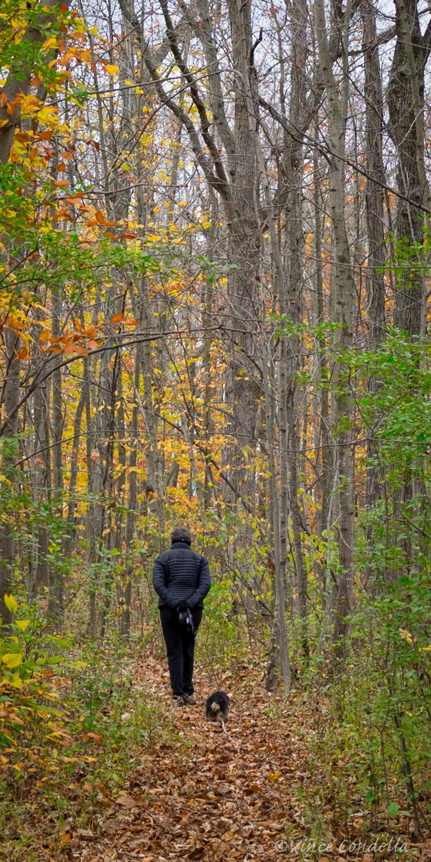 A Walk in the Woods - Vince Condella