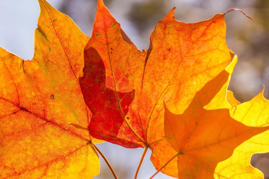 Leaves in the Sun - Marci Konopa