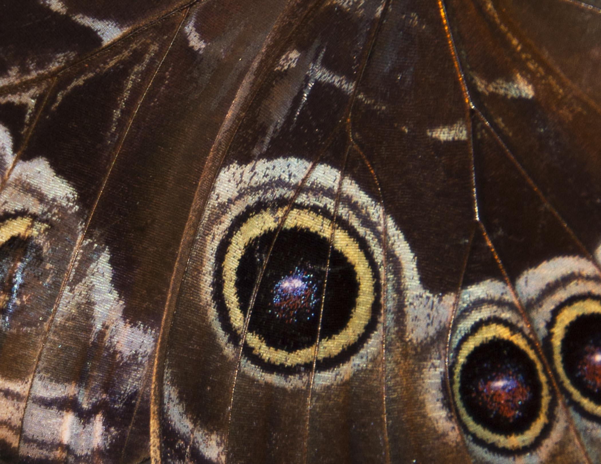 Butterfly Wings - Phyllis Bankier