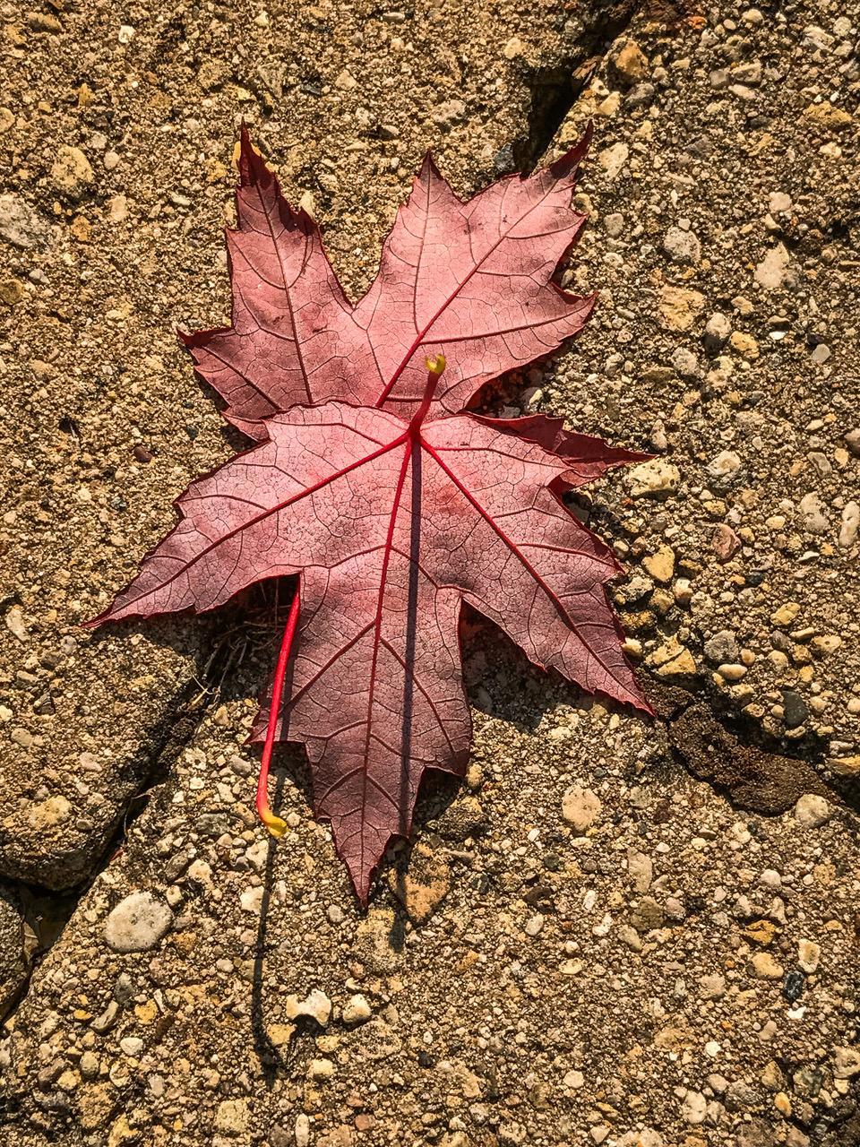 1st place - Fallen Leaves on Flagstone - Jack Kleinman