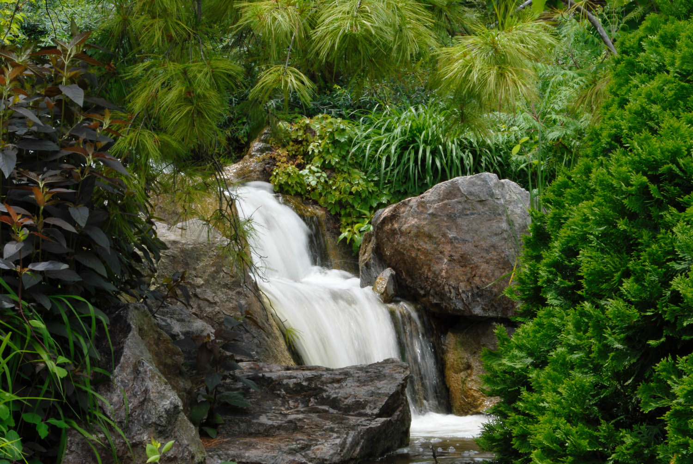 Water in the Garden - Phyllis Bankier