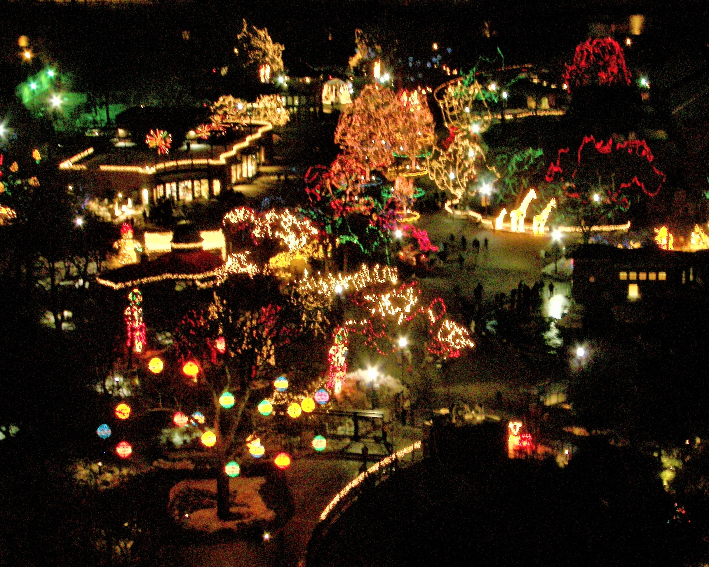 Festive Lincoln Park Zoo - Steve Morse
