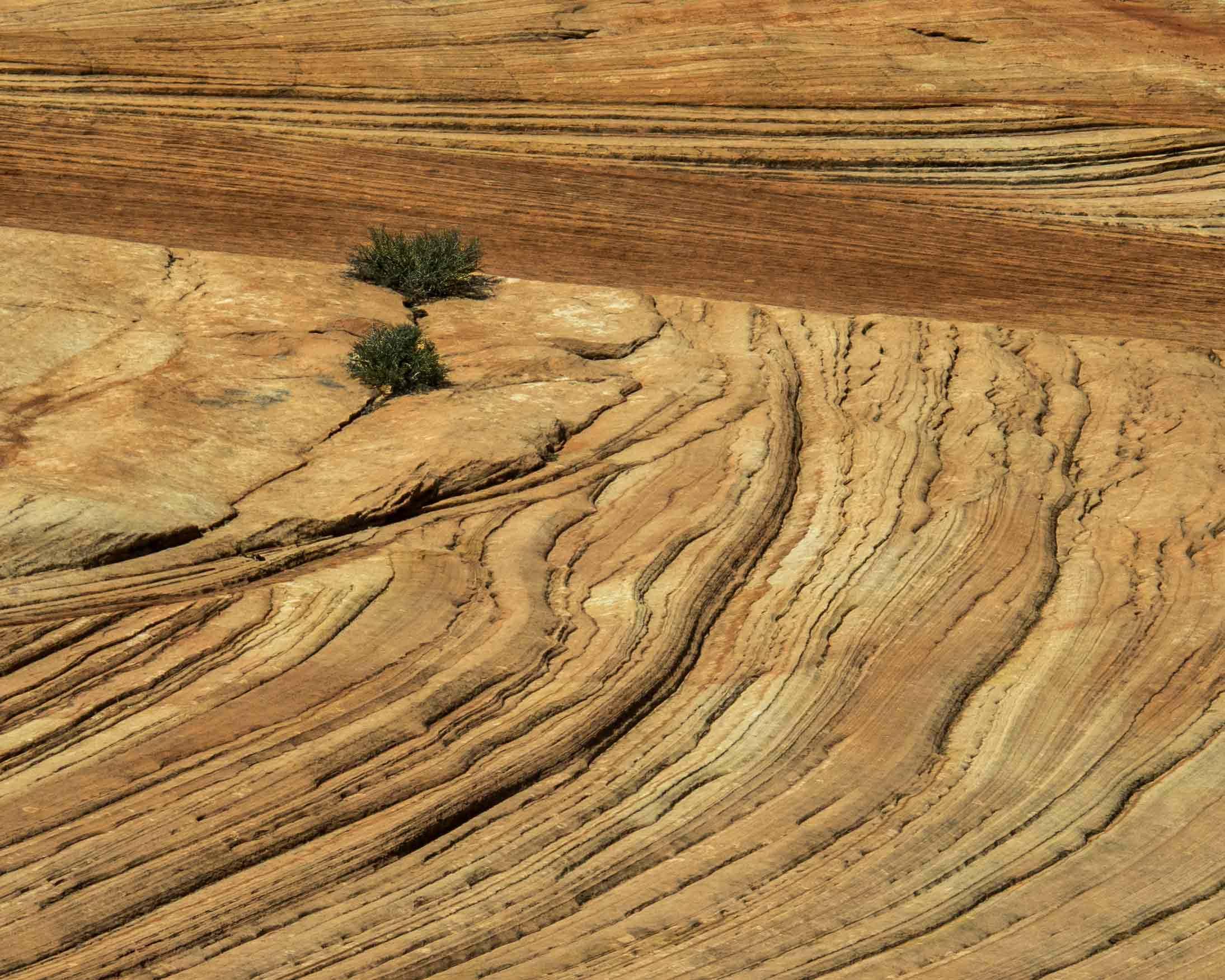 Nature - Zion-Lines - Audrey Waitkus