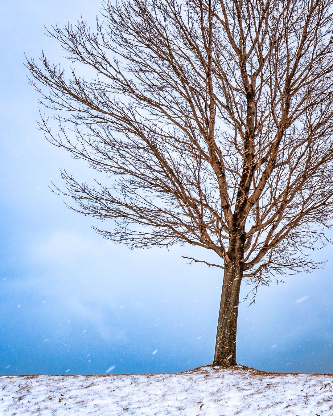 Tree - Ian Dickmann