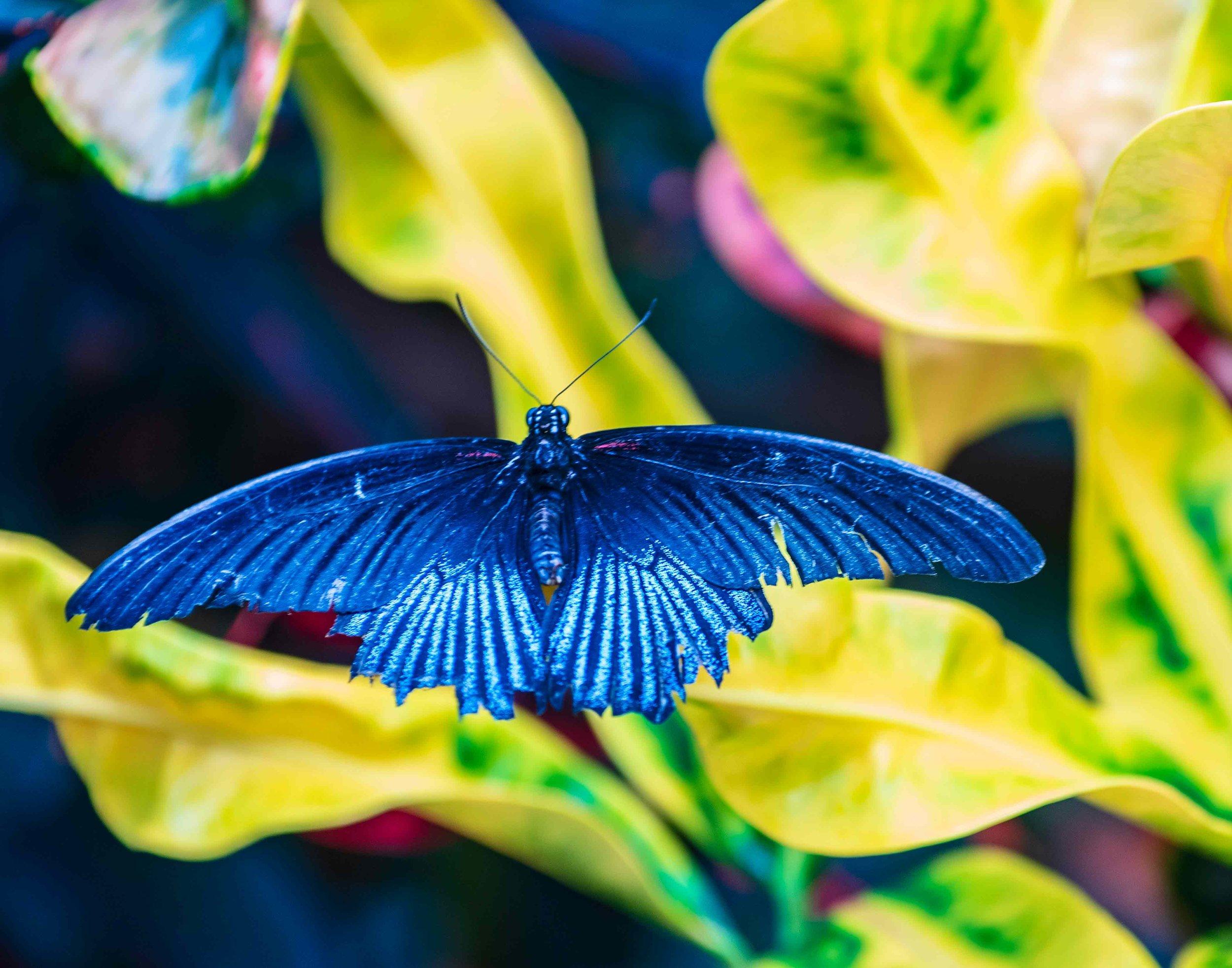 Blue Flutter - Gary Peel