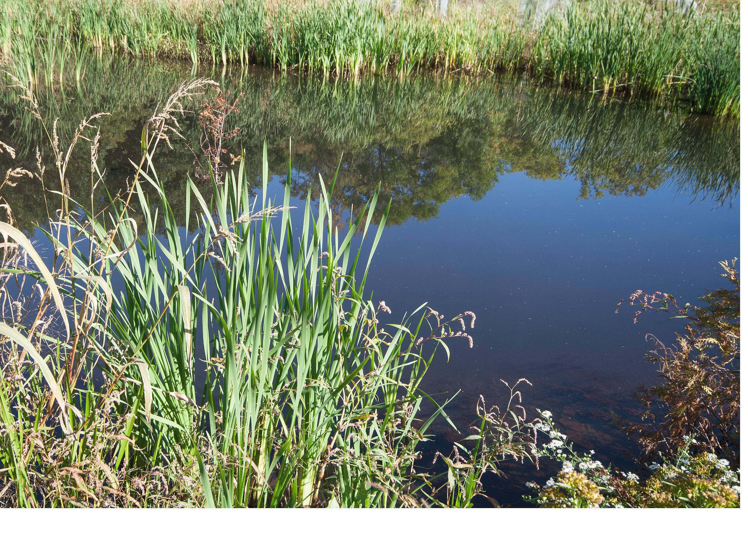 Ephemeral Pond at UEC - Susan Allen