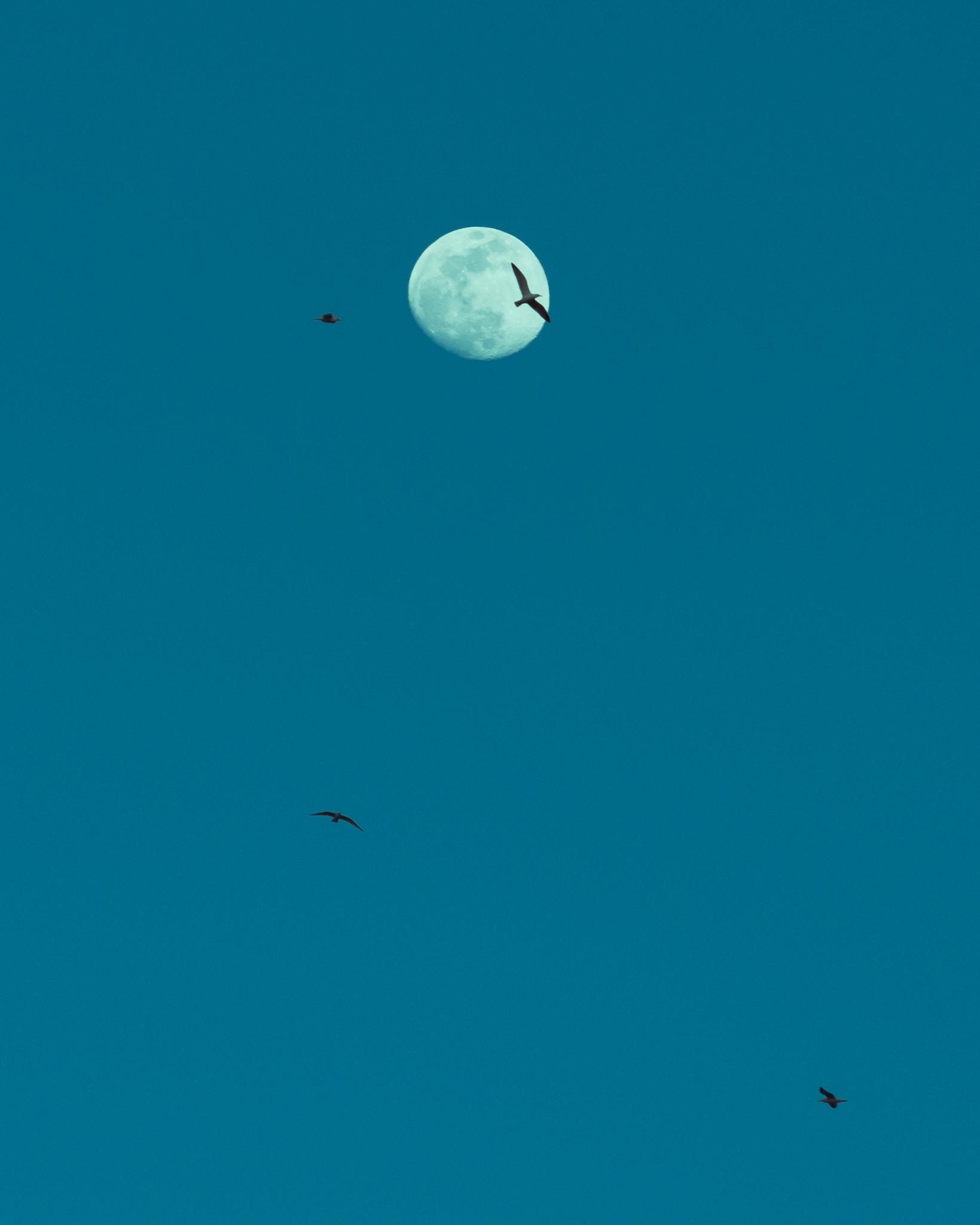 Lazily Grazing a Blue Moon - Joe Swiggum
