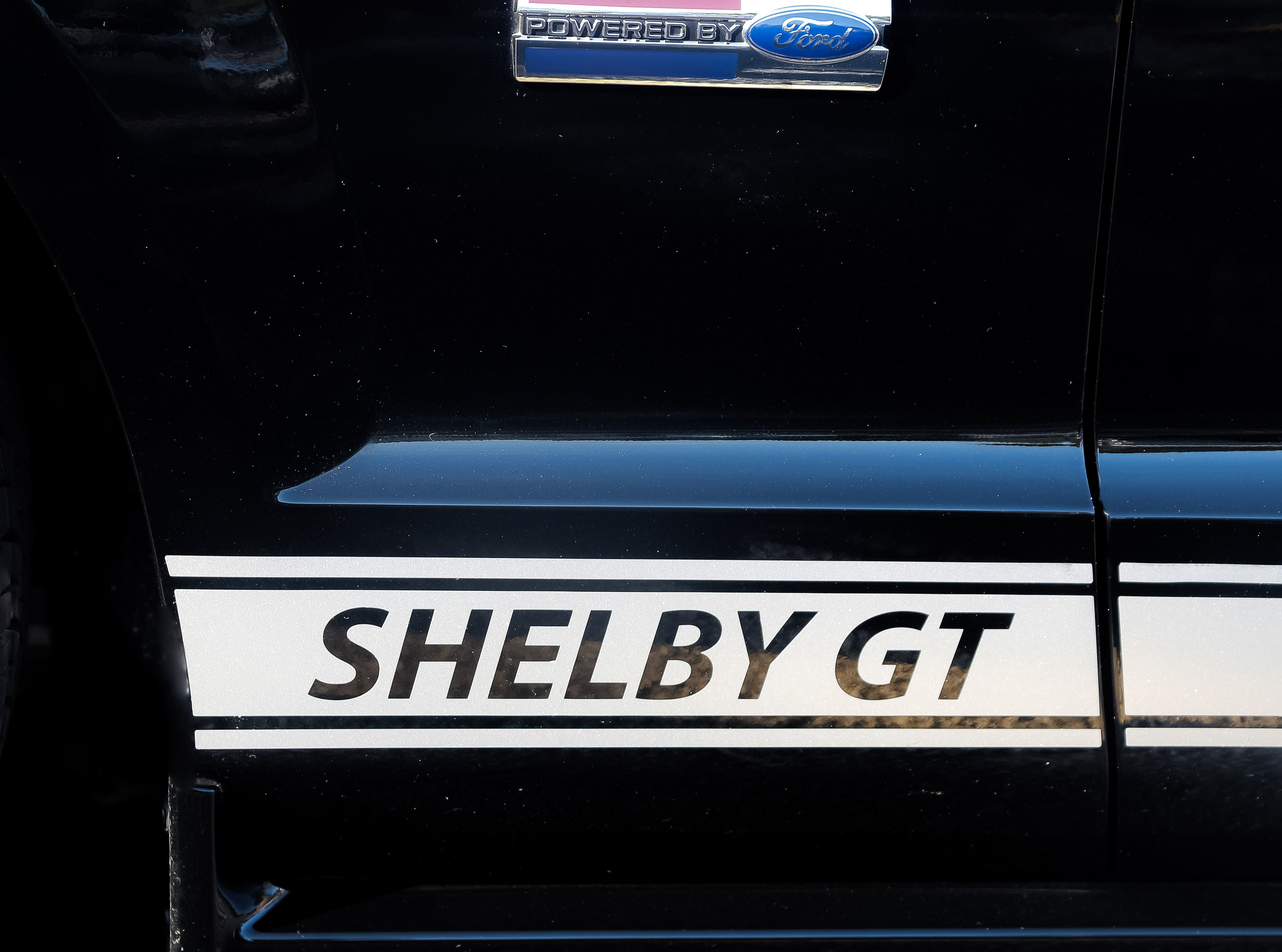 Shelby - Dan Ford
