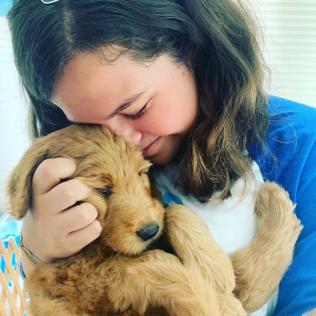 "If this post gets 1 million likes, my girl @sofia.carmosink will get to bring home this puppy. Her daddy drives a hard bargain @jujybugg #Repost @sofia.carmosink with @get_repost ・・・ If this post gets 1 million likes my dad will buy us a dog!!! Help a sis out!!!!! - - - - - - - To post on your story- click the paper airplane icon on to send post to others and click the first option ""post to your story""!!!"