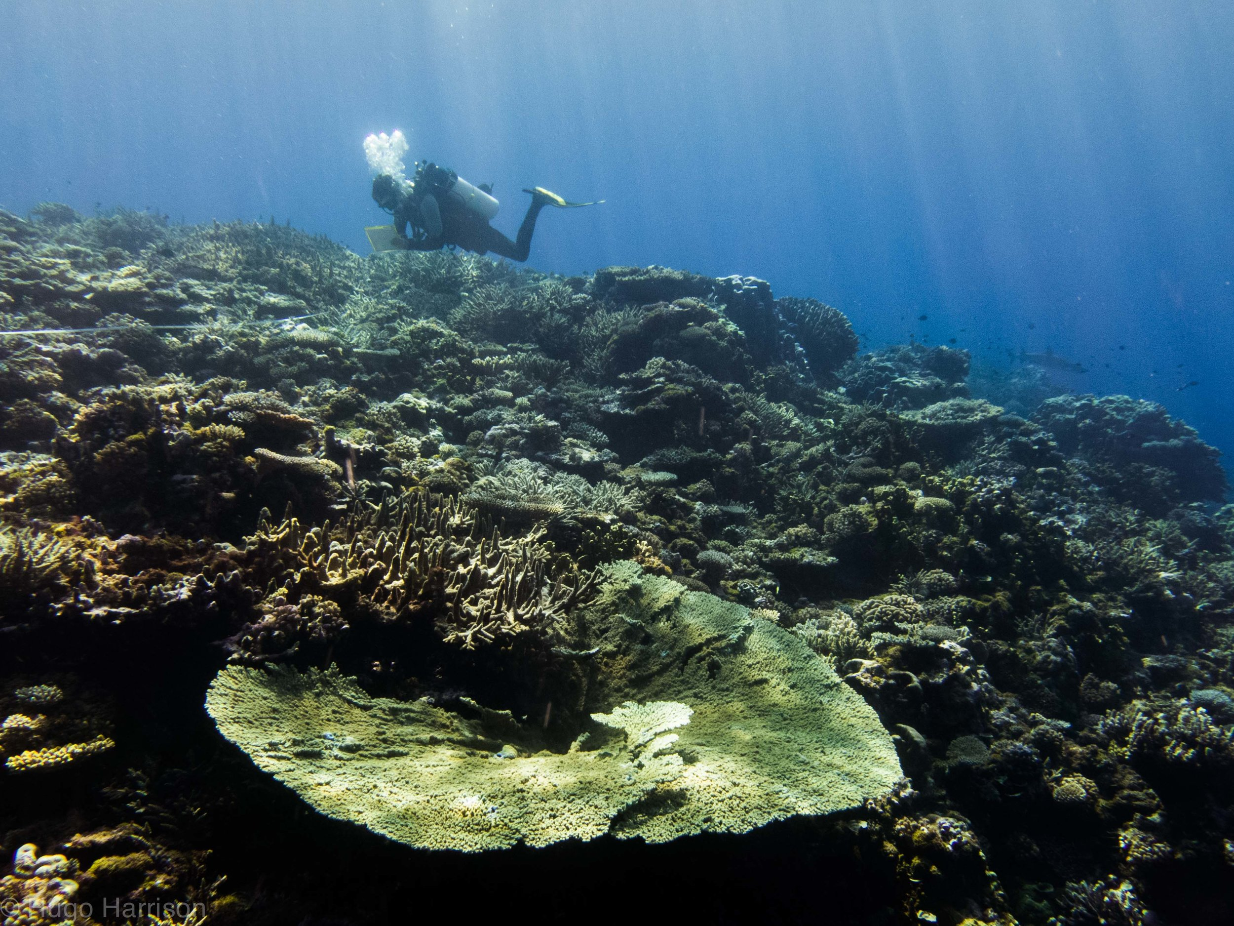 Surveying corals at Kenn Reef in the southern Coral Sea
