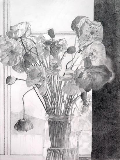 Poppy Drawing 1