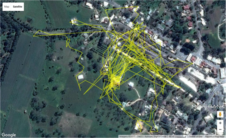 Map of a roaming cat's movement over five days. Photo courtesy of University of South Australia
