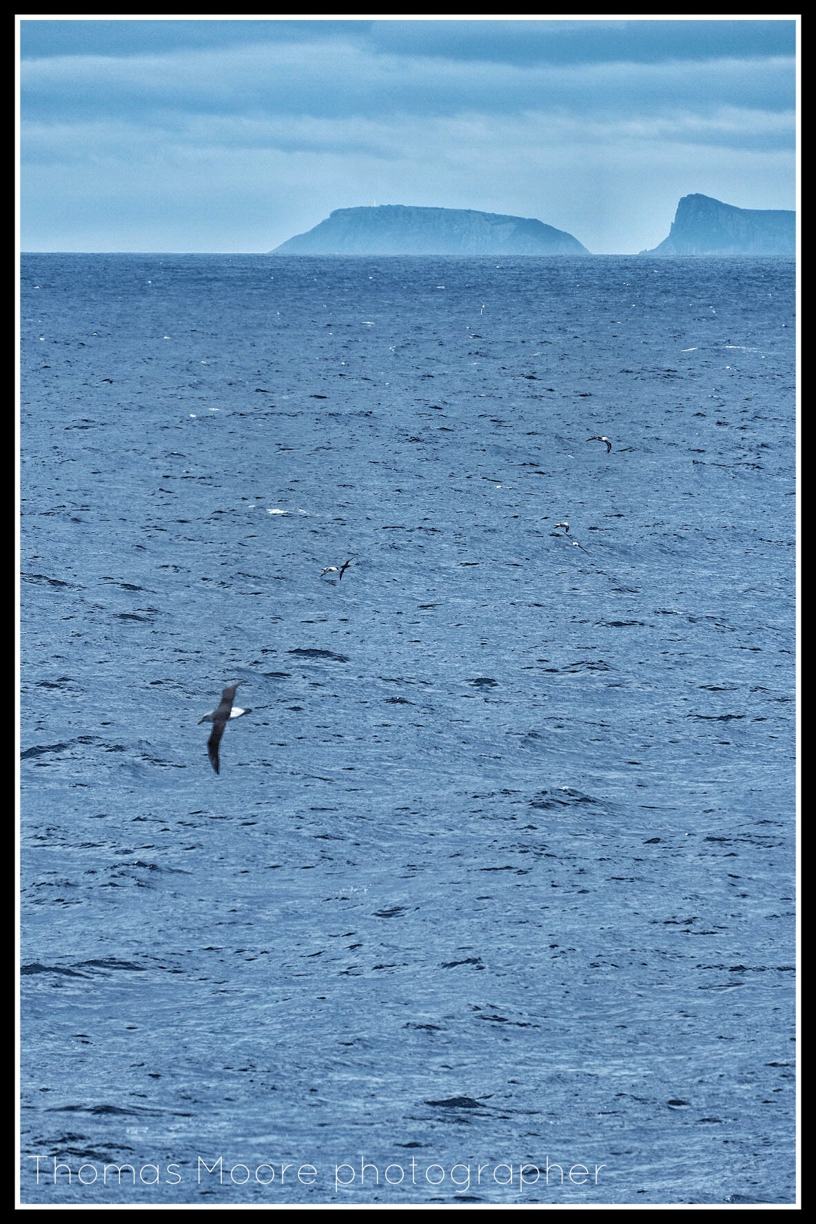 Albatross fill the air, Tasman Island in the distance – the location for the TTIDE southern moorings. Photo: Thomas Moore
