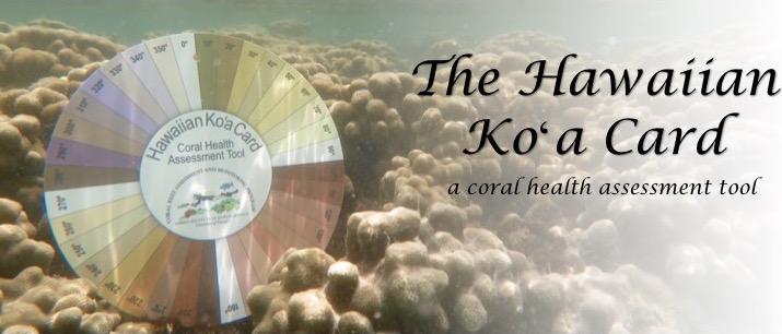 Koa Card flip book.jpg