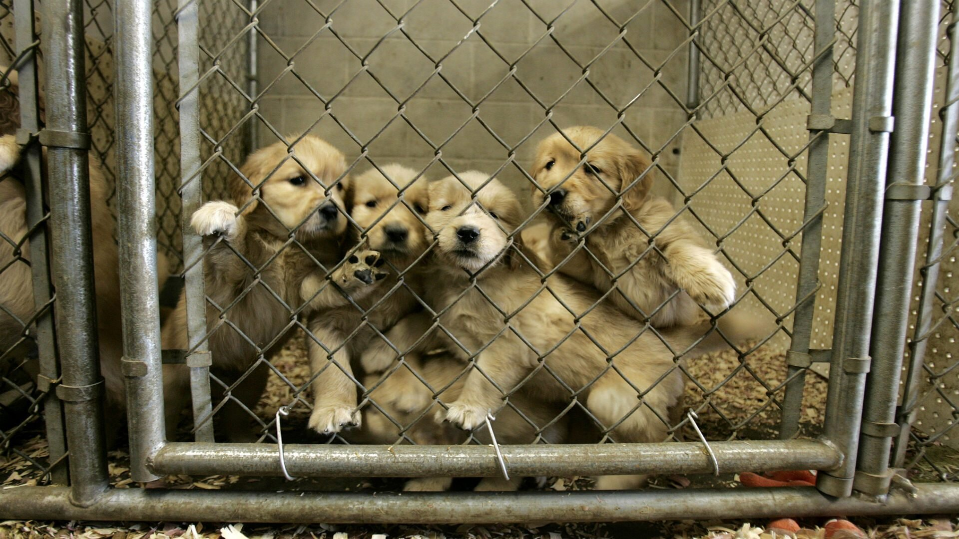 puppy-mill-legislation-1920x1080.jpg