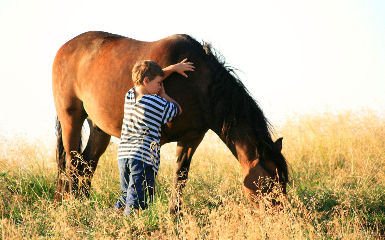 www.michaelihof.at    Michaelihof     Das SPIEGELSPIEL MIT PFERDEN: Bei diesem Spiel geht es darum intuitives freies Handeln zu üben, um den Zufall Zeit und Raum zu geben, damit er passieren und sich entwickeln kann. Das Spiegelspiel mit Pferden ist ein Forschungsprojekt das Ausdauer, Mut und Kraft verlangt, um den Strukturwandel unser Zeit zu begreifen.  Video