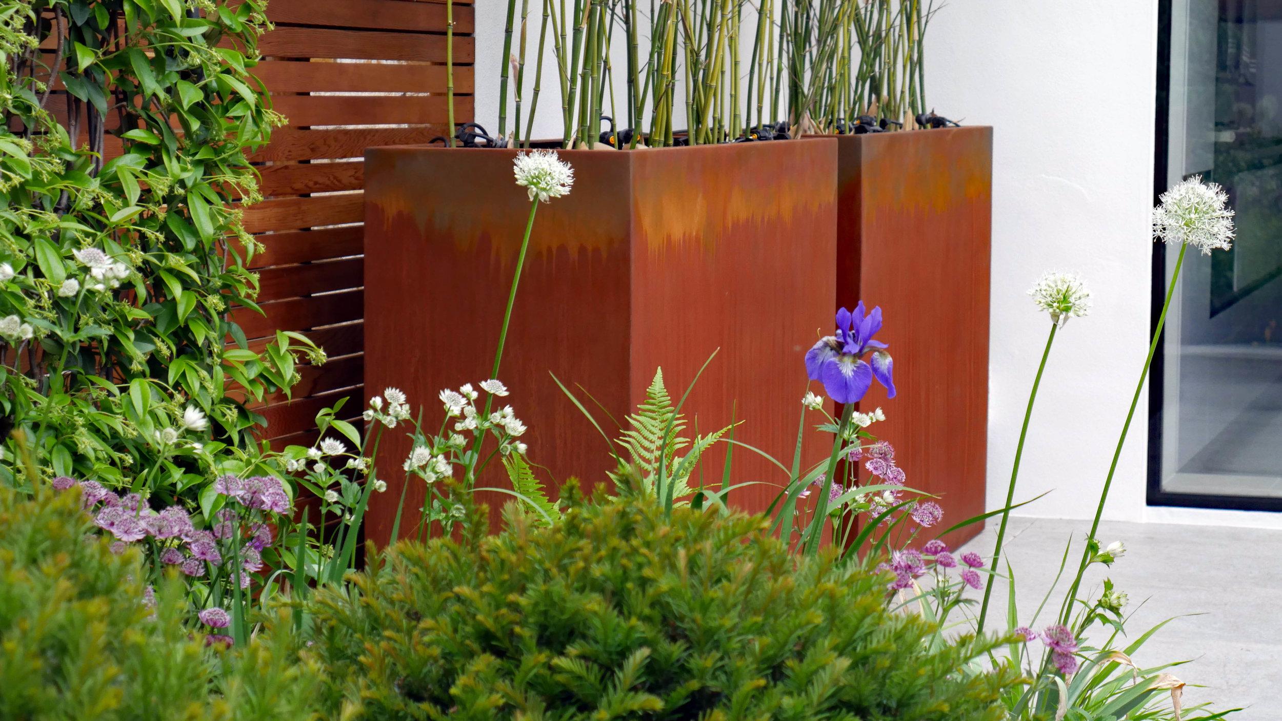 Tom Simpson Garden Design _ Highbury Garden 3.jpg