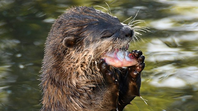love-your-zoo-otter-.jpg
