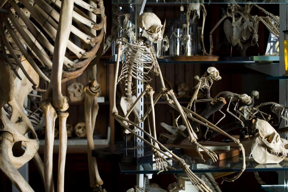(c) Matt Clayton - Grant Museum of Zoology