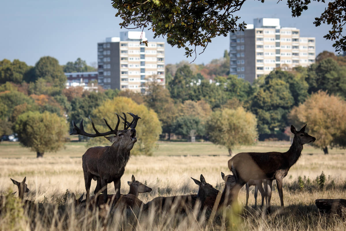 richmond park.jpg