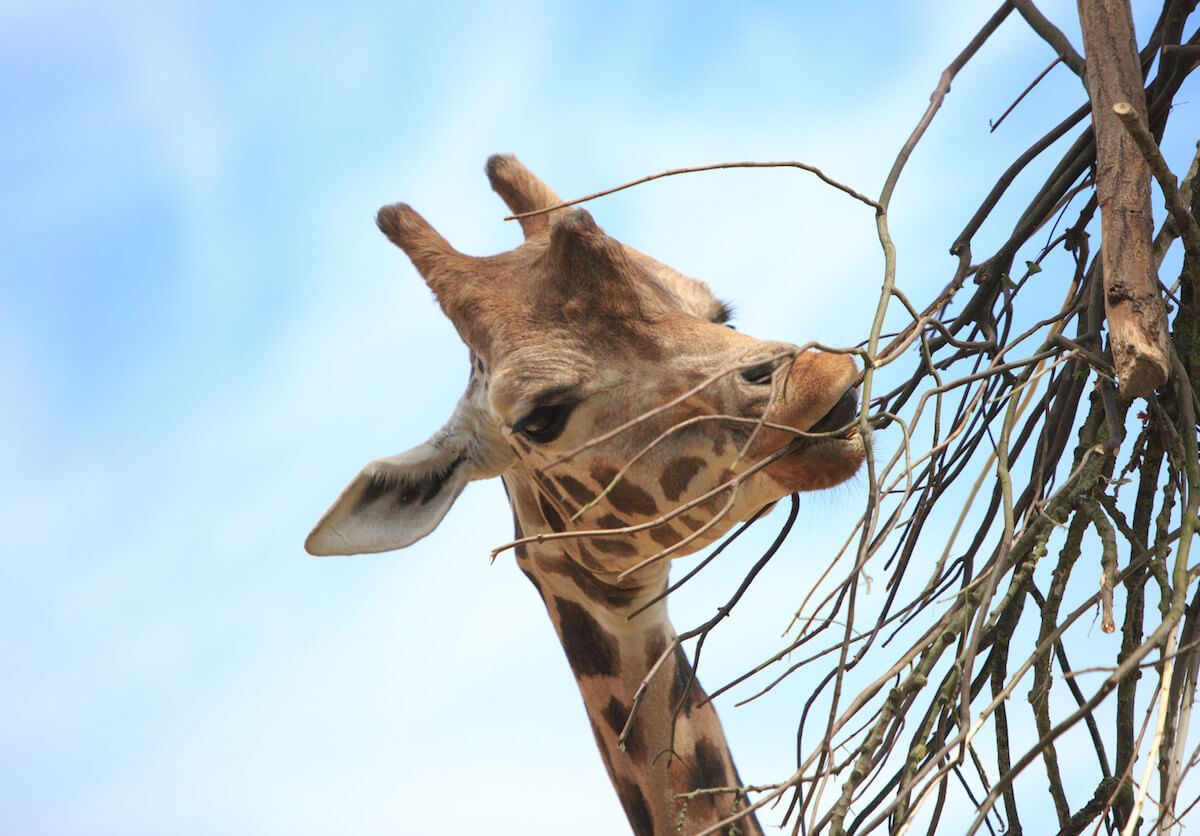 LONDON'S BEST FARMS AND ZOOS FOR CHILDREN-THE LONDON MOTHER