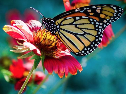 Free photo: Butterfly, Flower, Macro, Nature - Free Image on Pixabay - 743531 2017-01-05 17-55-37.jpg