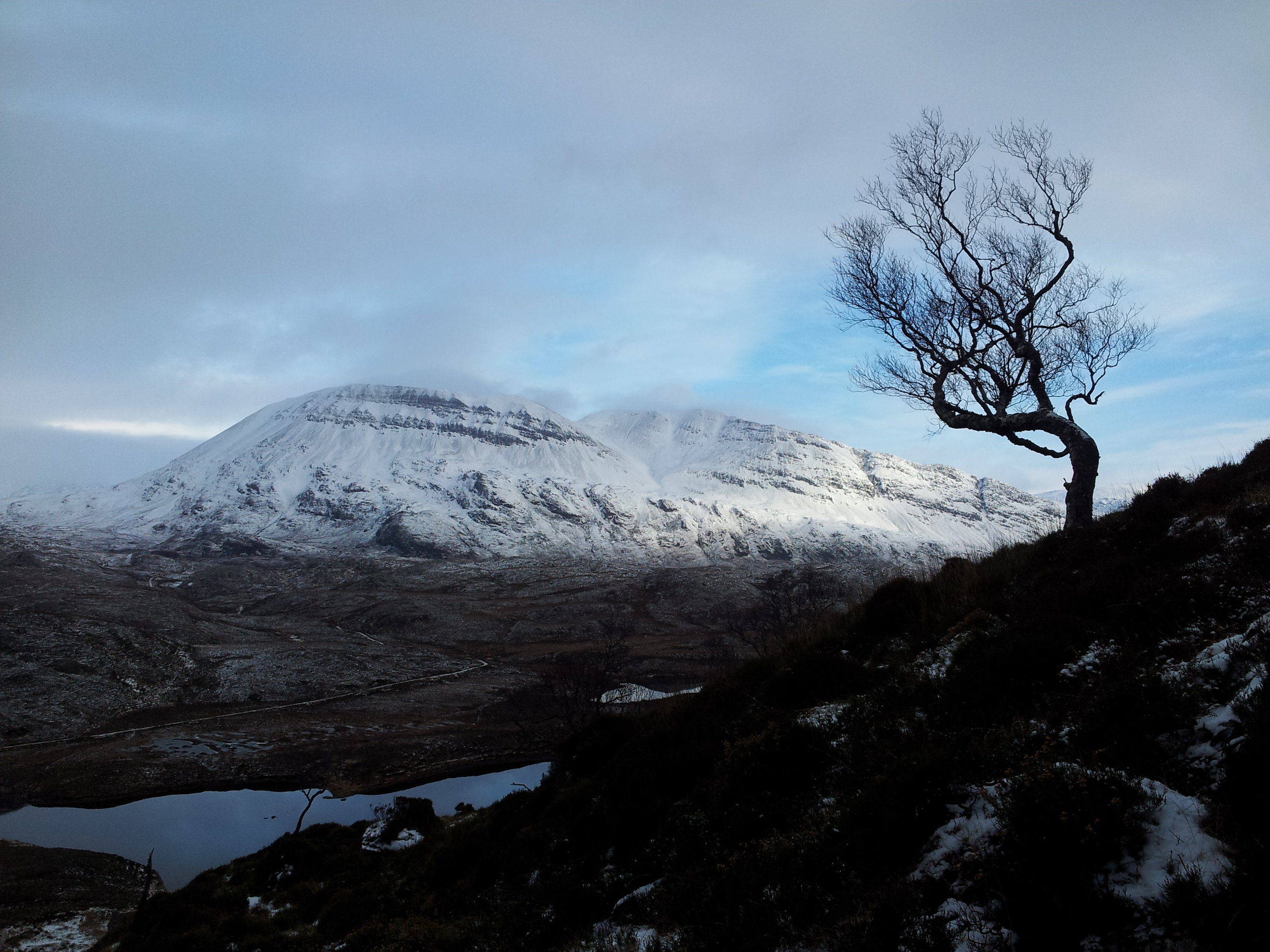 A lone birch on the lower slopes (Ben Arkle in the background)