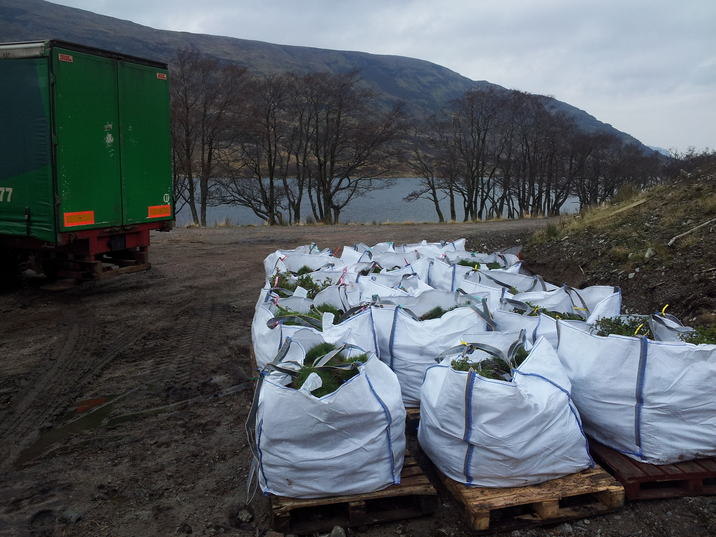 Delivery of young trees