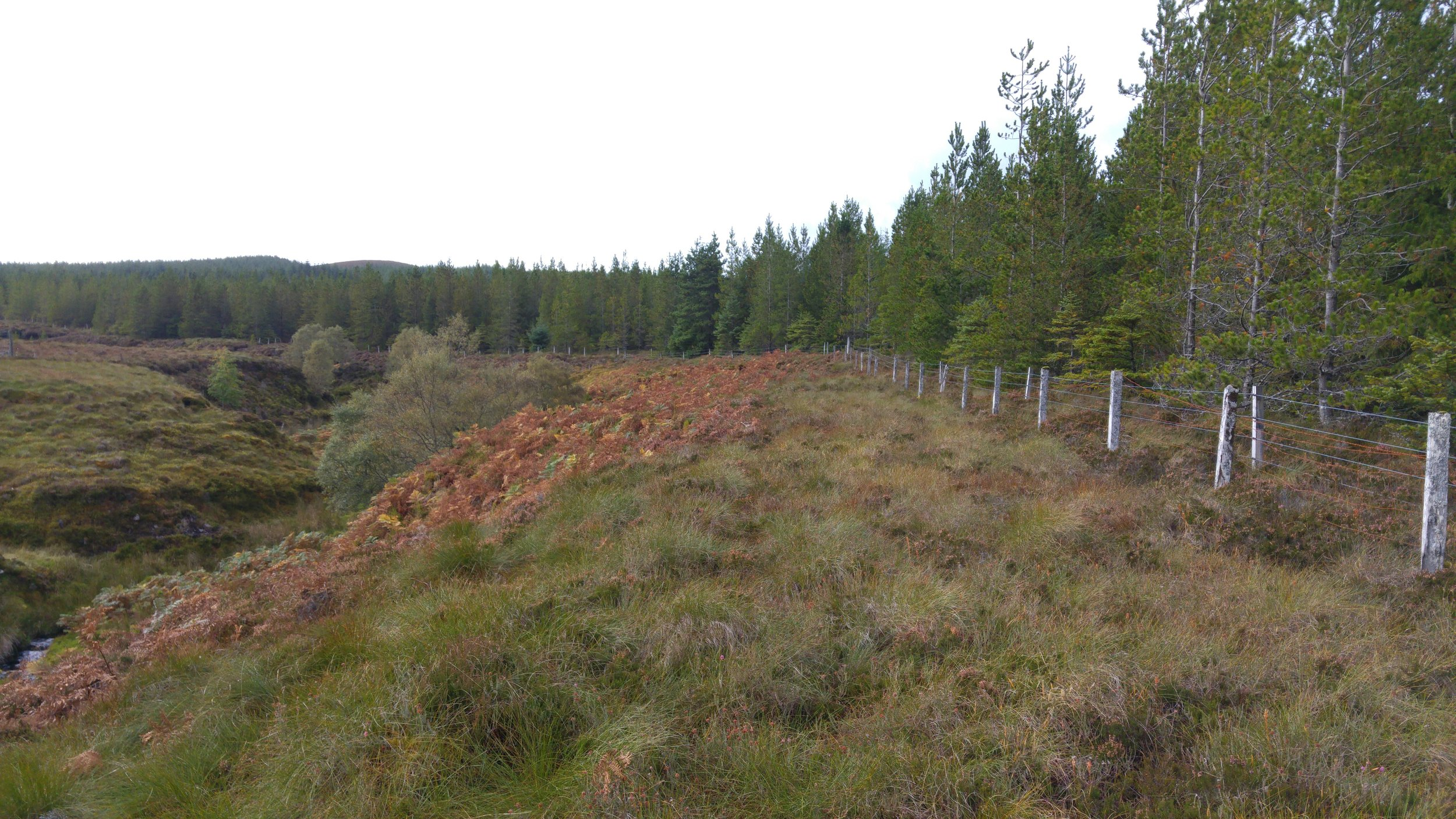 Here, the watercourse and its gulley can be seen on the left hand side of the picture. On the right, the 1970s plantations can be seen close to the riparian zone. Those conifers were planted on peat that is probably approaching two metres deep. As a result, the growth rate and quality is not very good even after almost forty years. An extensive stand of bracken ( Pteridium aquilinum ) can be seen in the middle distance. As foresters, we often think that bracken indicates good ground that can support tree growth.  That is true to a degree, but bracken can also grow on very poor ground so one has to also consider its form when visually assessing the ground of its suitability for tree planting (e.g. stand spread and height).  In this case, the bracken was of reasonable form but the peat depth was too deep for tree planting without substantial - and undesirable - management inputs.  I suspect that the bracken was growing well because of nutrients being washed into the area in which it was growing, rather than an indication of underlying soil fertility. In other words, it was growing in a 'flushed peat'.  Of course, a considerable disadvantage of the presence of bracken on a site is that it will seriously impede tree establishment. Its presence therefore requires control both before and during the tree establishment phase and this adds to the cost of implementing the project.  Considering this cost and the high price of manual labour, chemical controls are the best solution in many situations and at this moment in time.