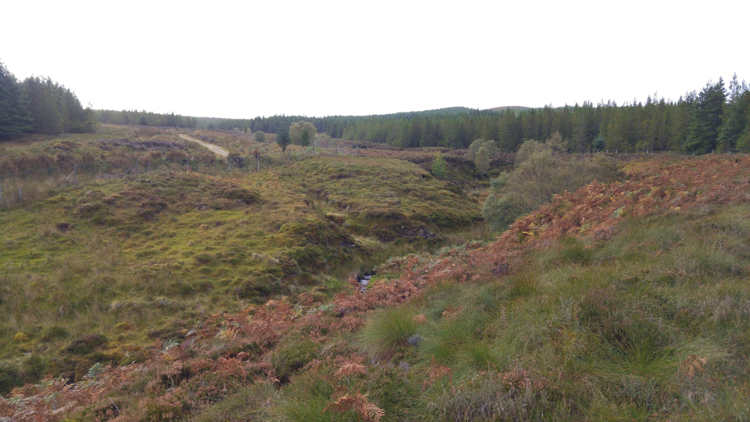 Upon first glance, this looks like an ideal place to plant some trees: small knolls of well drained ground within the riparian zone with an underlying mineral soil and reasonable fertility. Actually, upon looking more closely, my peat probe indicated that the peat was too deep for any tree planting work to be eligible for grant support and that most of the project costs would probably have to be met by the landowner.