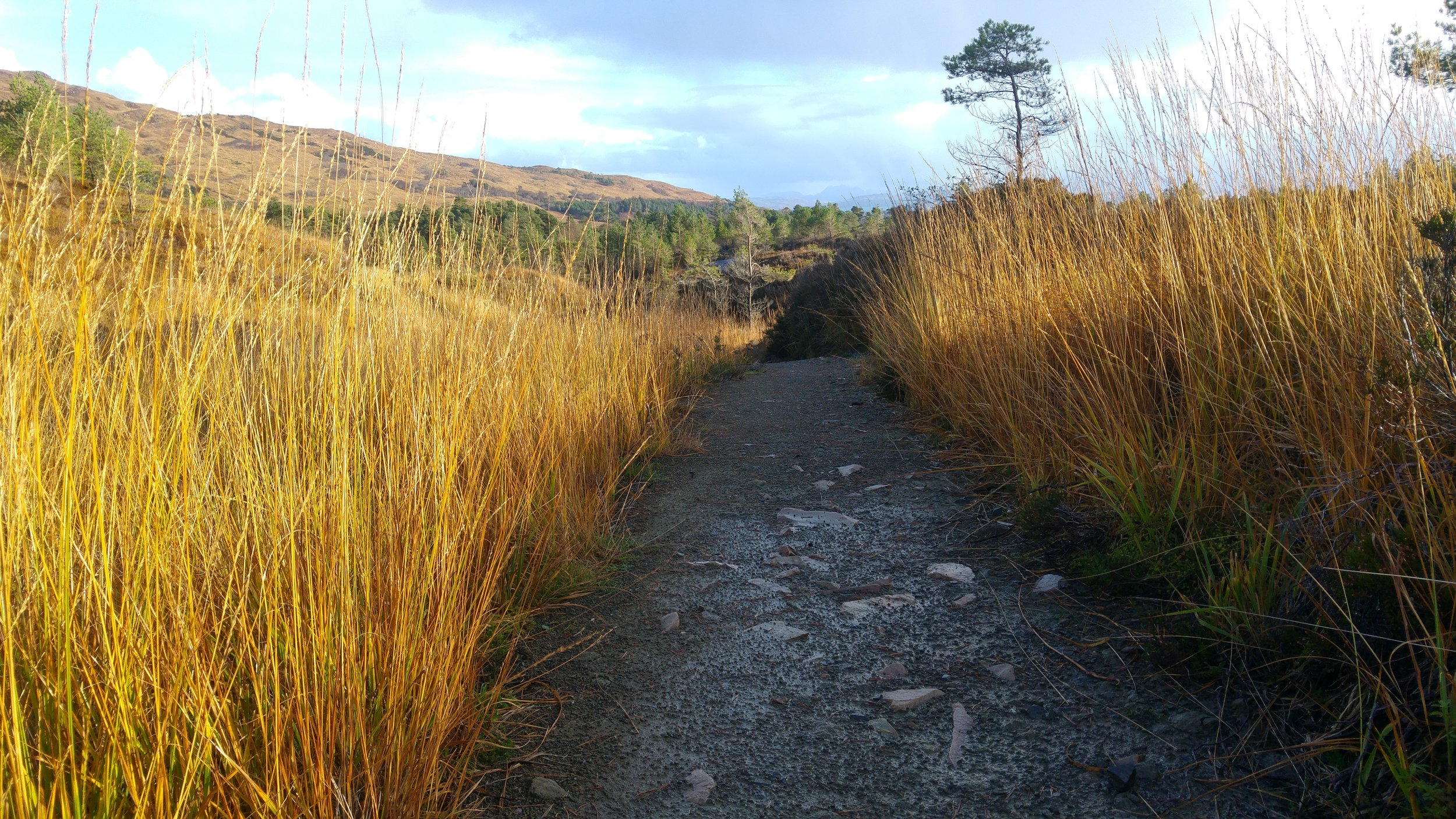 On sunny days, the molinia on the open hill looked fantastic with its autumn colour.