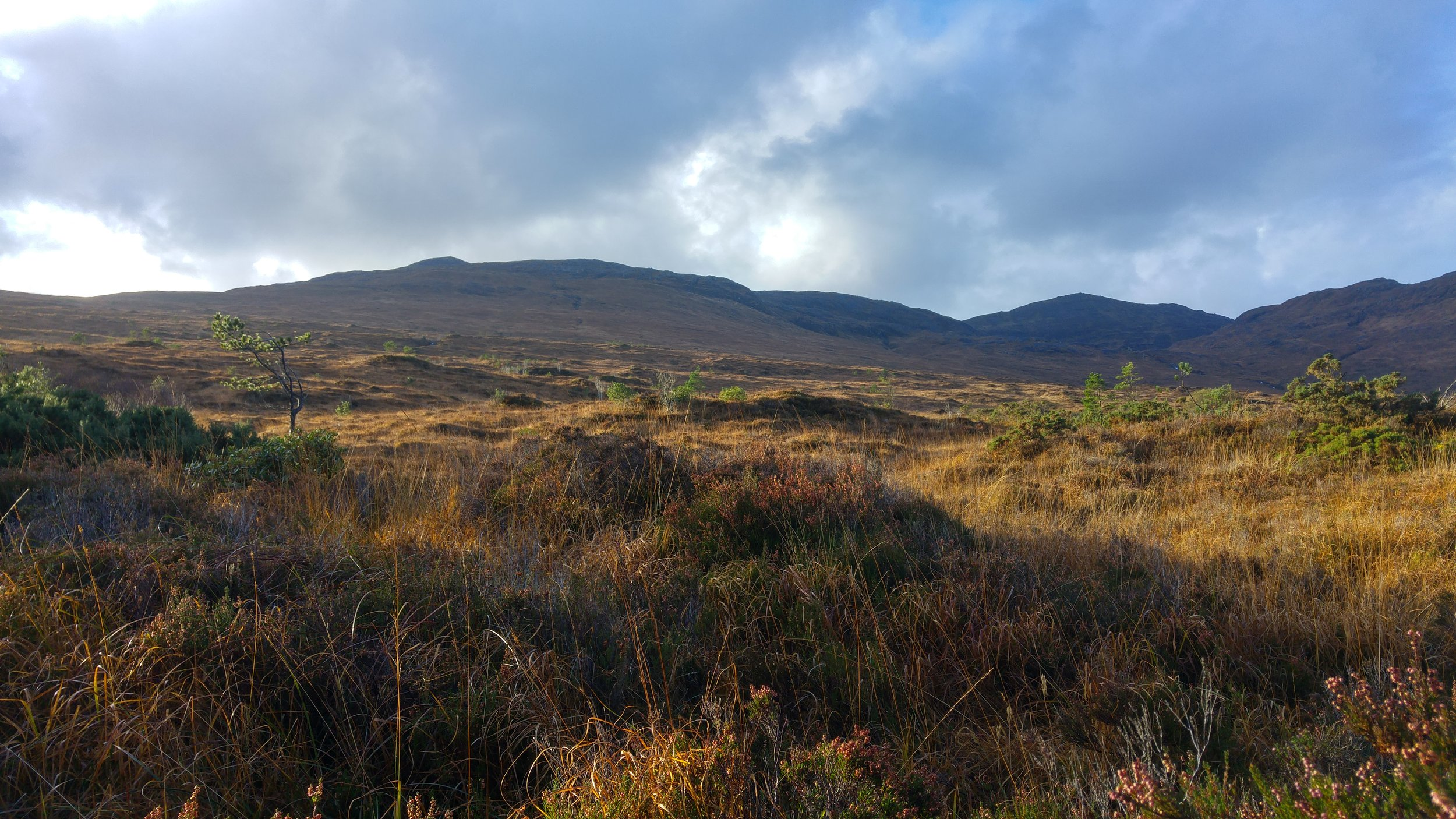 The open hill was very wet, rough and difficult to survey in a systematic fashion. In wet and windy weather it was cold and exposed. In sunnier weather, the late autumn colours looked great and it was a pleasure to walk the ground.