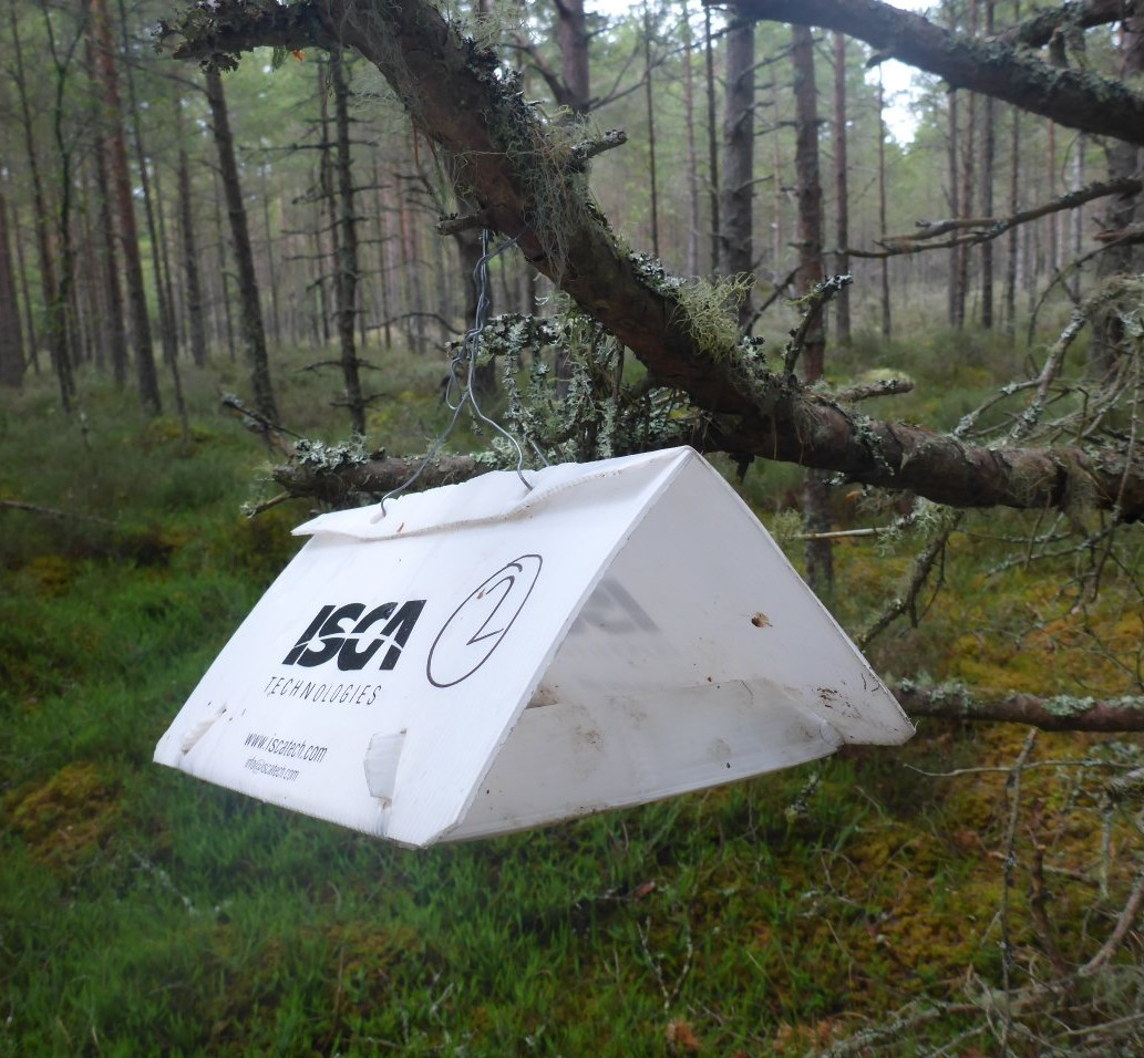 Polycarbonate tent holding a pheromone trap and a sticky end (for a moth)