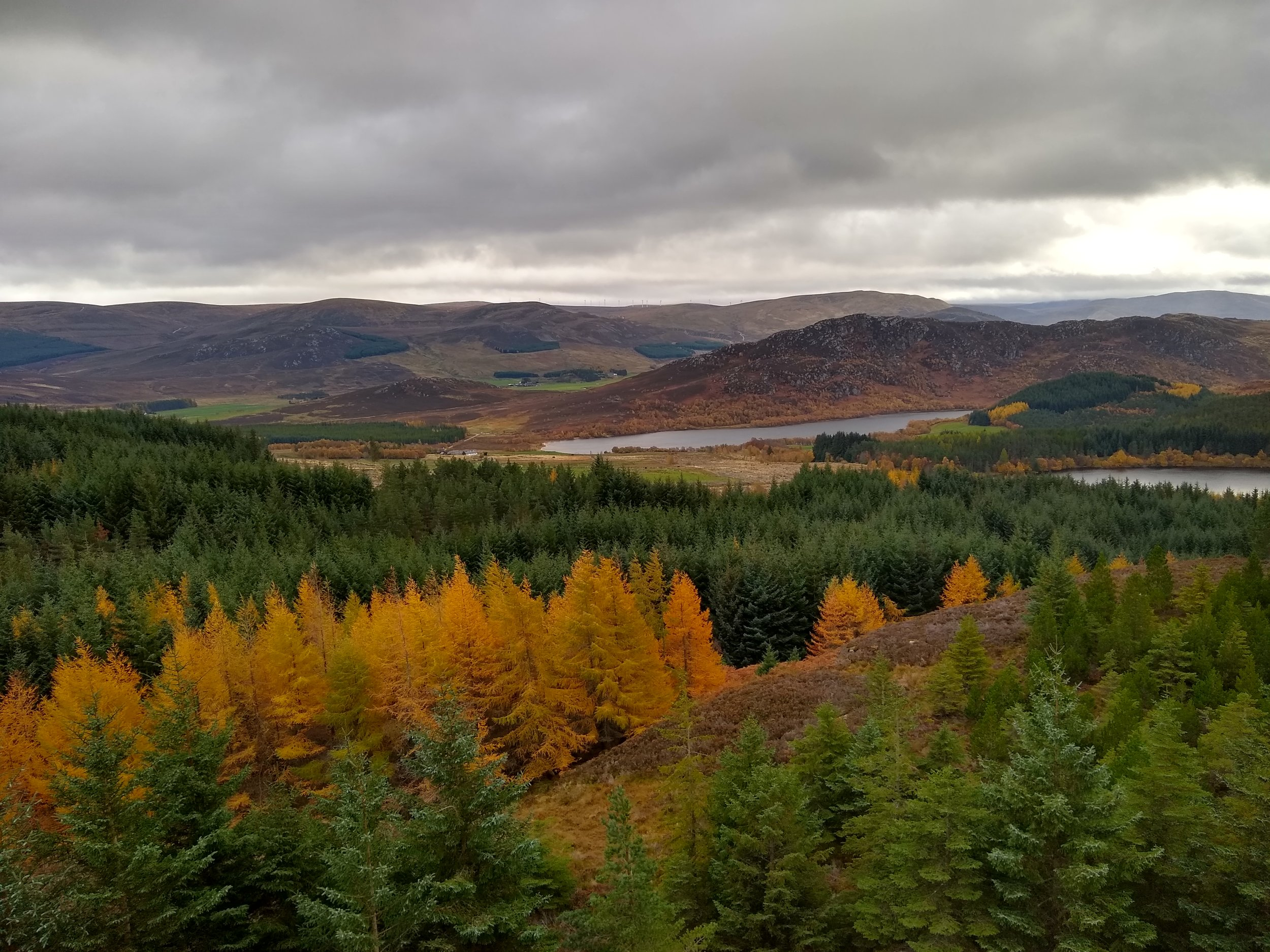 Larch in the autumn landscape