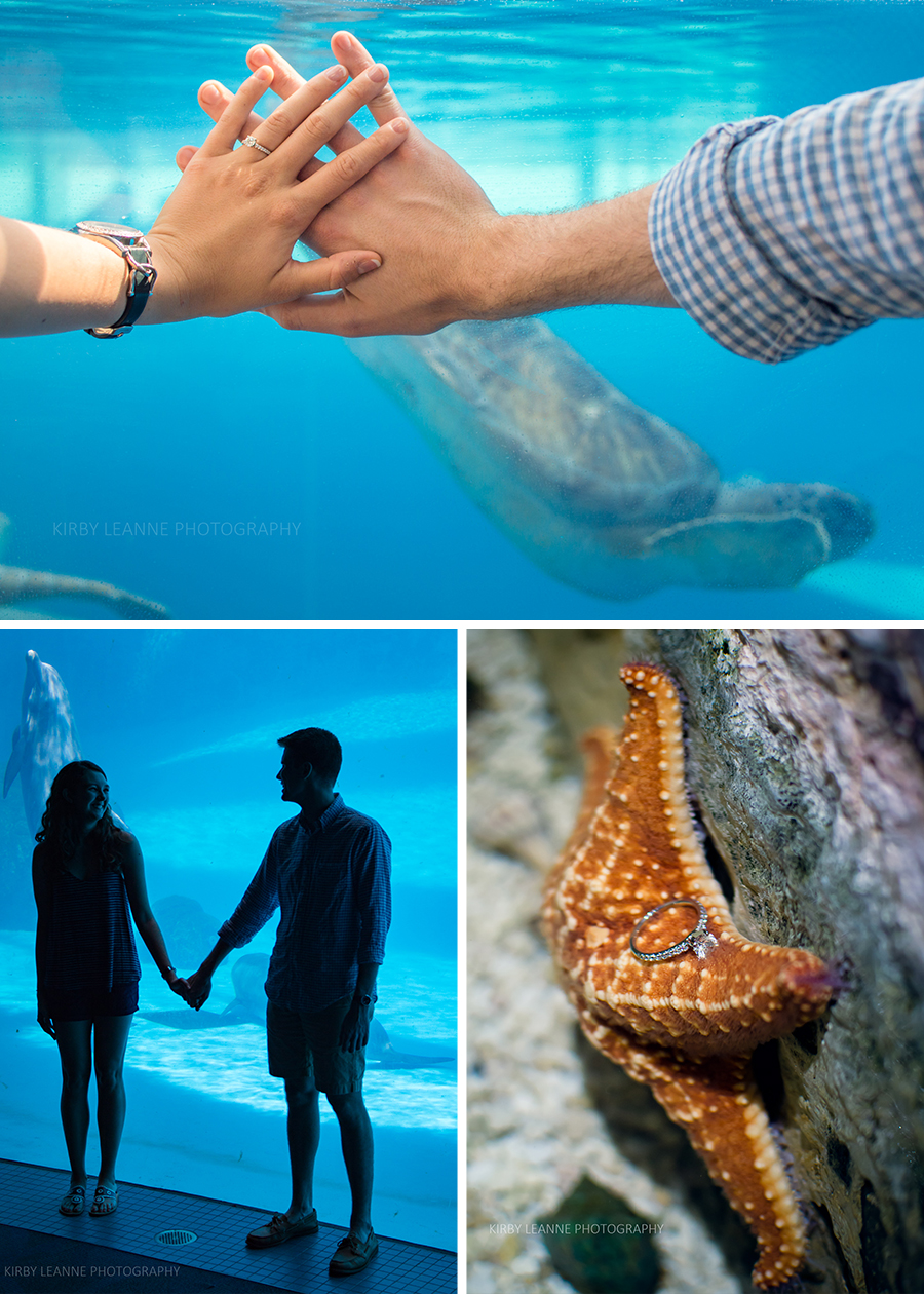 Sea turtles, dolphins, and starfish. Oh my!