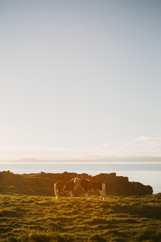 Iceland_Walk-395.jpg