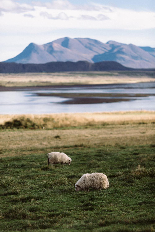 Iceland_Walk-226.jpg
