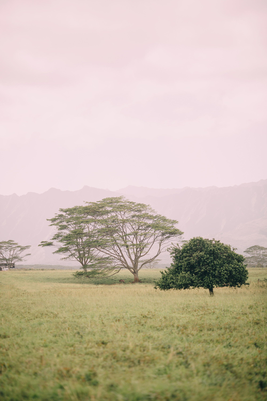 KauaiIsland-20.jpg
