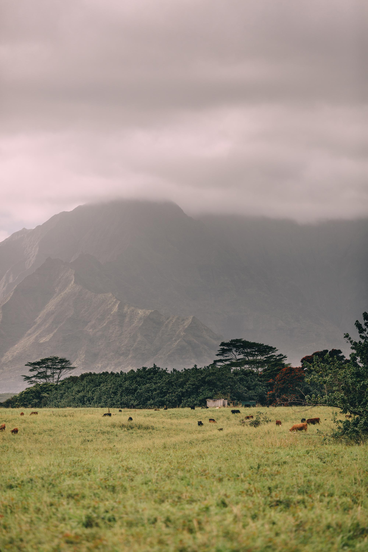 KauaiIsland-21.jpg