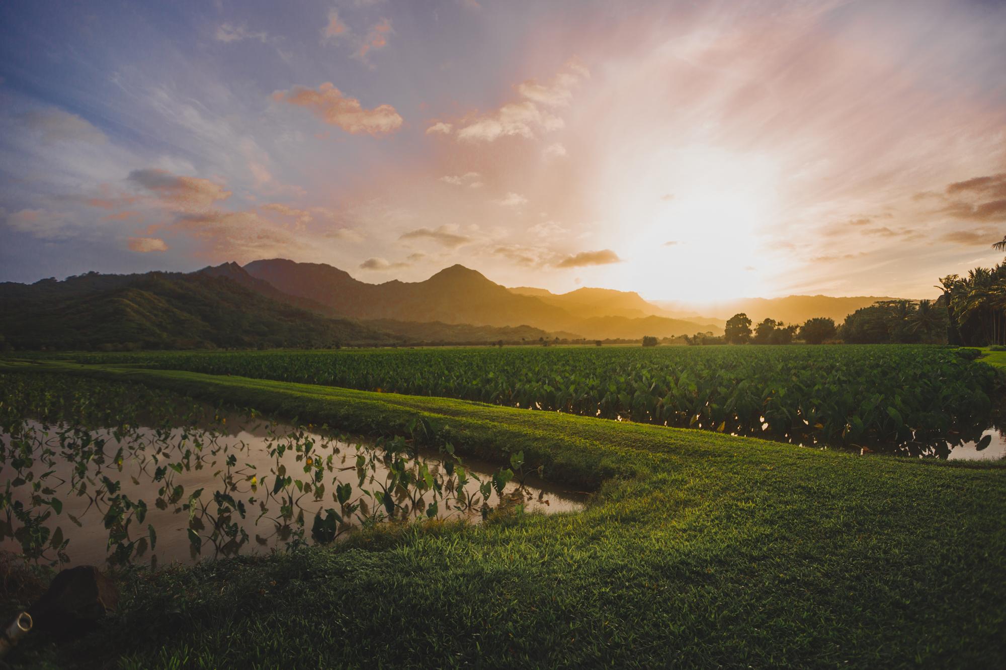 KauaiIsland-26.jpg