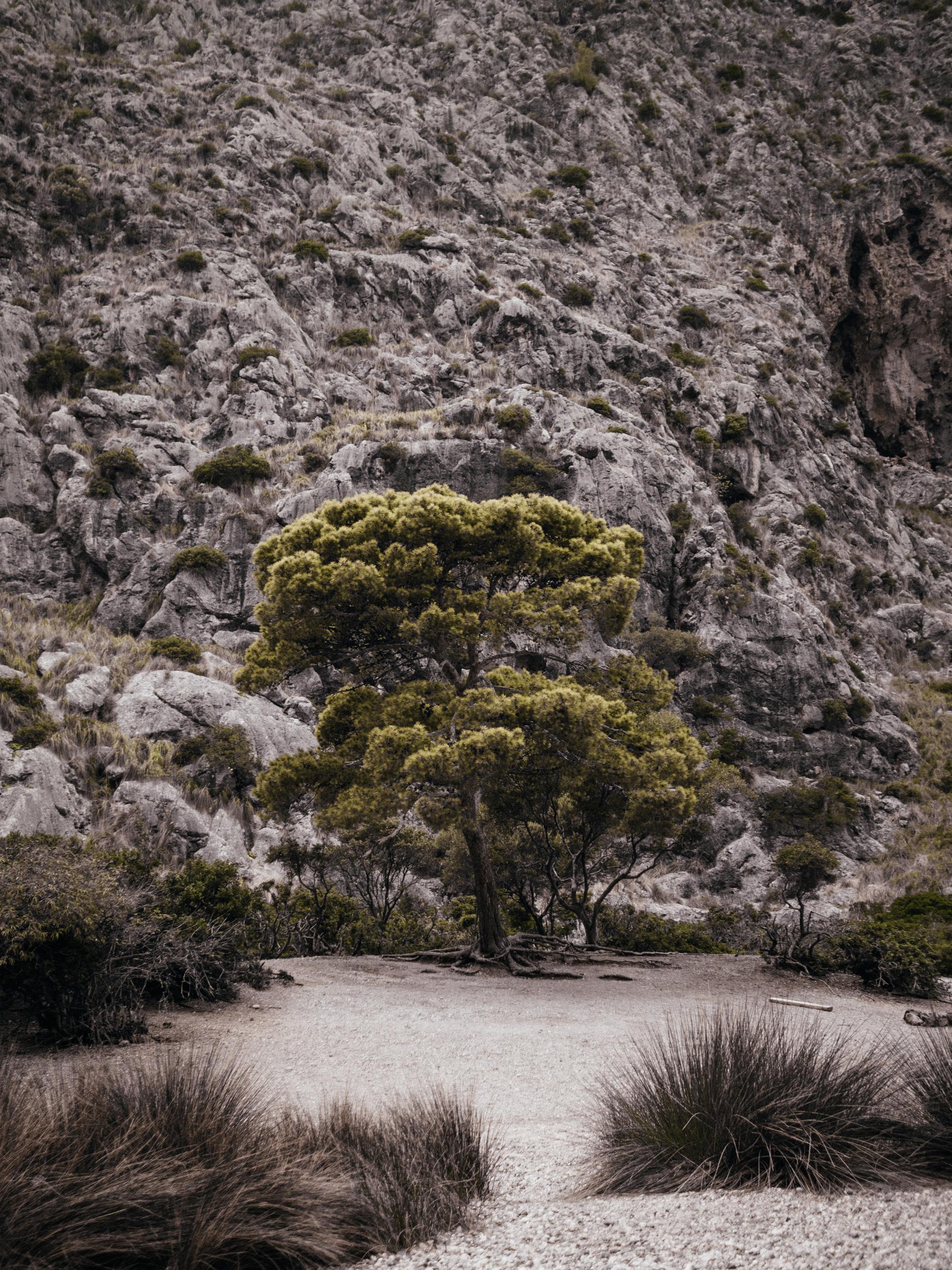 Mallorca16-7.jpg