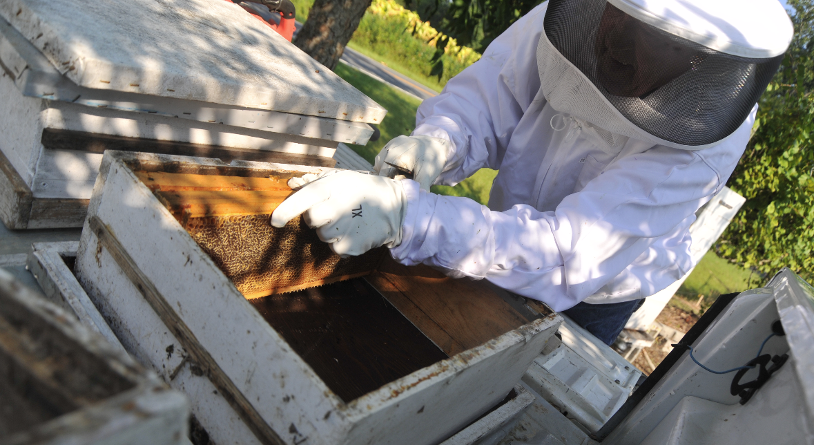 City Council to discuss regulating bees at council meeting Tuesday, February 13 at 6:30 p.m.