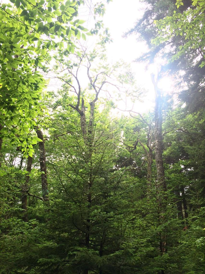 sunlight cape.jpg