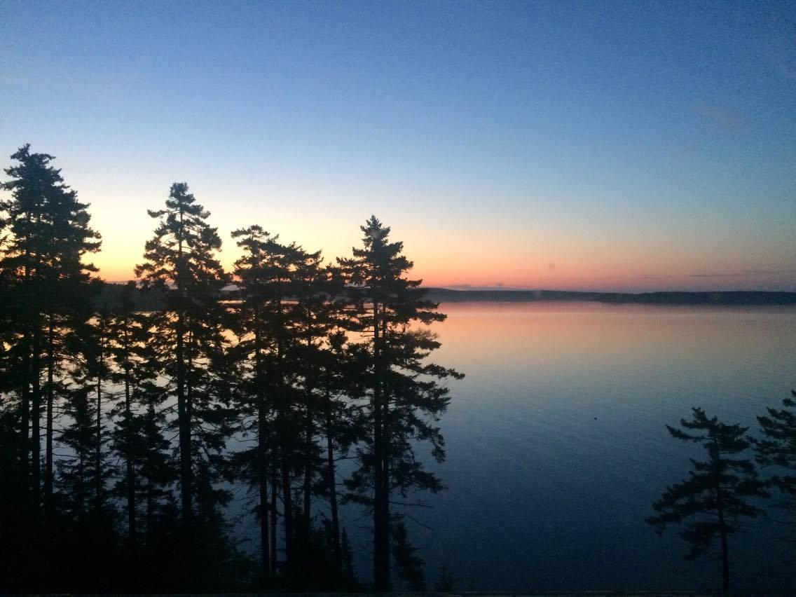 sunrise trees.jpg