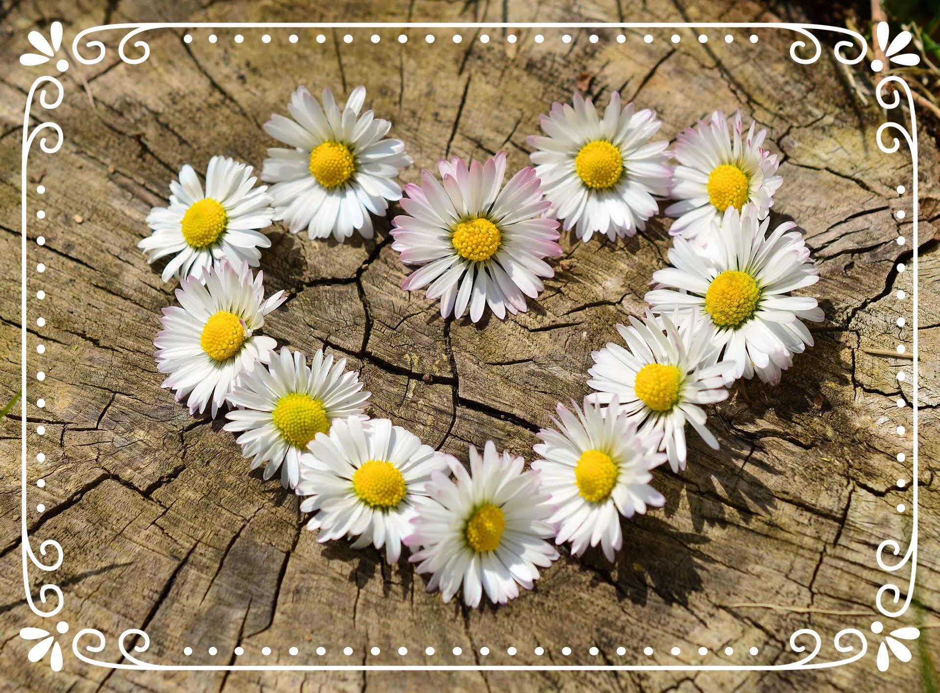 flower meaning comp.jpg